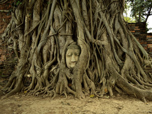 Trees have grown up around this abandoned carving of Buddha's head, which Harleen Kaur photographed at the ruins of the old city of Ayutthaya, Thailand.